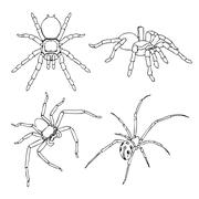 spider - stock illustration