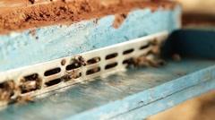 Bees humming around. - stock footage