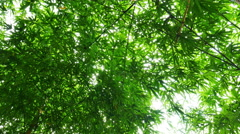 Under Bamboo Forest on slider shot Stock Footage