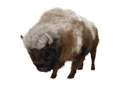 American Bison - stock illustration