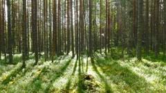 landscape with shadows of trees in forest - stock footage