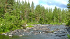 Landscape with river and forest in Karelia Stock Footage