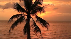 Coconut palm tree silhouette at sunset. Koh Phangan island, Thailand Stock Footage