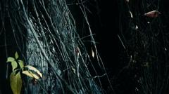 Creepy dark place in overgrown losovyh - stock footage