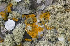 Lichen on Wall Stock Photos