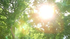 Green trees with sunlight through branches in urban park. Birds, pollen flying Stock Footage