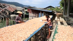 Woman and girl working with dry shrimps in the fishing village. Thailand Stock Footage