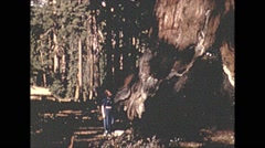 Vintage 16mm film, 1941, Mariposa grove grizzley giant - stock footage