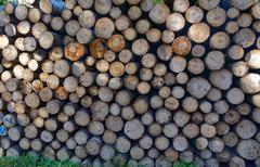 Aspen timber - stock photo