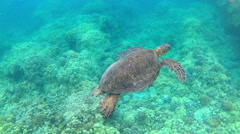 Happy Green Sea Turtle Swims Floats Glides Peaceful Underwater Reef Stock Footage
