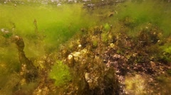 Beautiful seaweed and formations illuminated by sunlight in slow motion Stock Footage