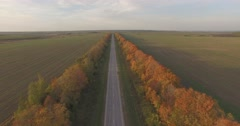 Beautiful autumn and automobile road Stock Footage