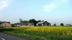 Blooming yellow rape near village Stock Footage