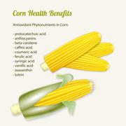 Vector illustration of stylized fresh ripe corn in the cob. - stock illustration