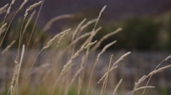 Closeup shot of grass with river in background - stock footage