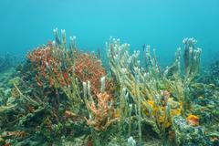 Diversity of sea sponges on the ocean floor Stock Photos