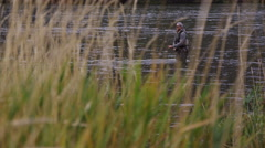 Man fly fishing in river is framed by tall grass - stock footage