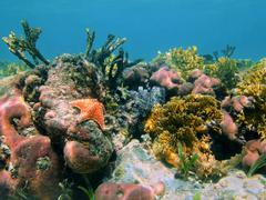 Underwater coral reef in the Caribbean sea Mexico - stock photo