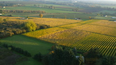 Aerial video of Willamette Valley, Oregon vineyards in fall color: 4K Ultra HD - stock footage