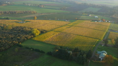 Aerial video of Willamette Valley, Oregon vineyards in fall color: 4K Ultra HD Stock Footage