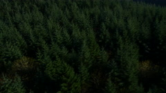 Aerial shot of Oregon forest: 4K Ultra HD Stock Footage