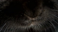Small dwarf black bunny nose close-up Stock Footage