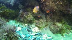 Laguna Beach Reef Scene Stock Footage