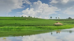 Tea plantation in Thailand Stock Footage