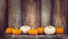 Mini pumpkins in a row against rustic background Stock Photos