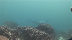Manta Rays at a Cleaning Station Stock Footage