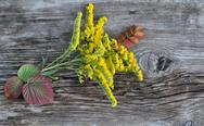 Stock Photo of Leaves and Flowers on Old Board
