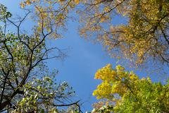 Autumnal Trees and Blue Sky - stock photo