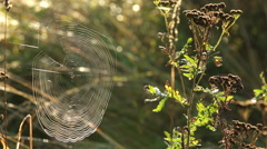 Spider web catches sunlight in Autumn Forest - stock footage