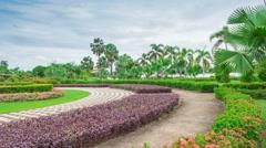Garden flowers in thailand Stock Footage