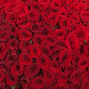 Red roses background natural texture of love - stock photo