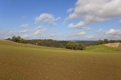 Yorkshire wolds landscape Stock Photos