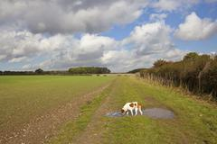 Pet dog in the yorkshire wolds Stock Photos