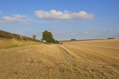 yorkshire wolds harvested wheat field - stock photo