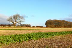 Wolds scenic - stock photo