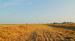 After harvest Stock Footage