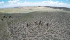 Wyoming Wild Horses - Free roaming Mustangs - Birds Eye Shot Stock Footage