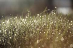 Grass covered with morning dew in the rays of sun - stock photo