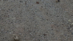 Black ants running on the ground Stock Footage
