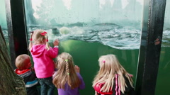 Children watching white bear at zoo Stock Footage