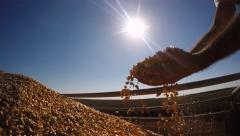 Farmers Hands Holding Corn Kernels Against the Sun Stock Footage