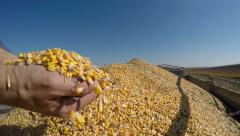 Hands Pouring Corn Kernels Stock Footage
