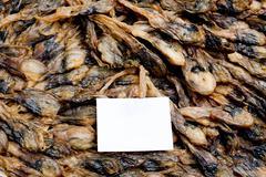 Shellfish : Angle's wing, Oriental angel's wing,Pholas orientalis - stock photo