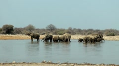 Elephants, etosha national park, namibia Stock Footage