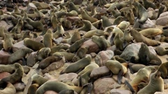 Seal colony, cape cross, namibia Stock Footage
