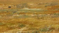 Grass moving in desert Stock Footage